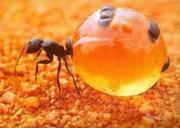 Уничтожение муравьев в Алматы и Алматинской области